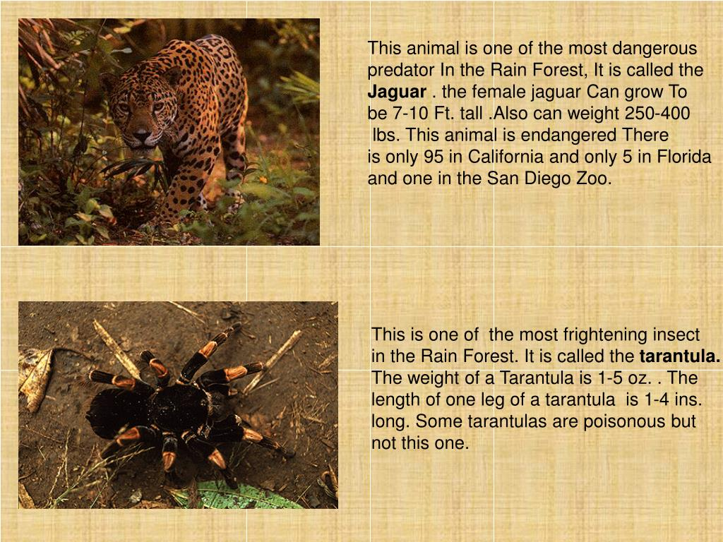 This animal is one of the most dangerous