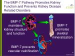 the bmp 7 pathway promotes kidney function and prevents kidney disease related disorders