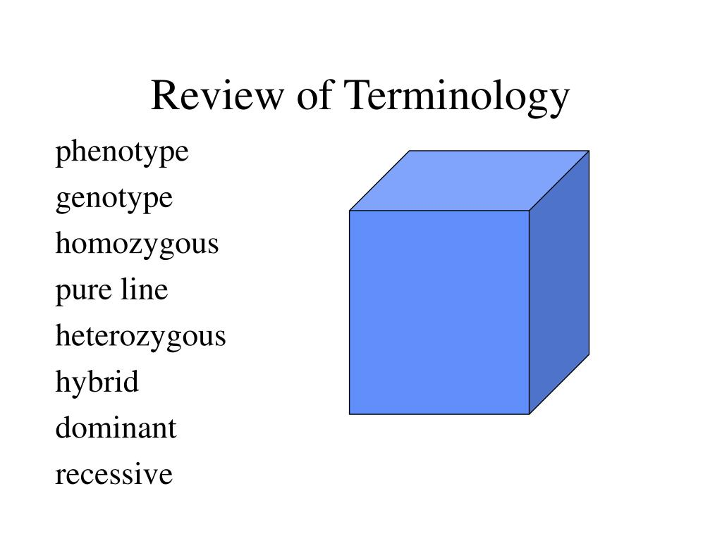 review of terminology l.