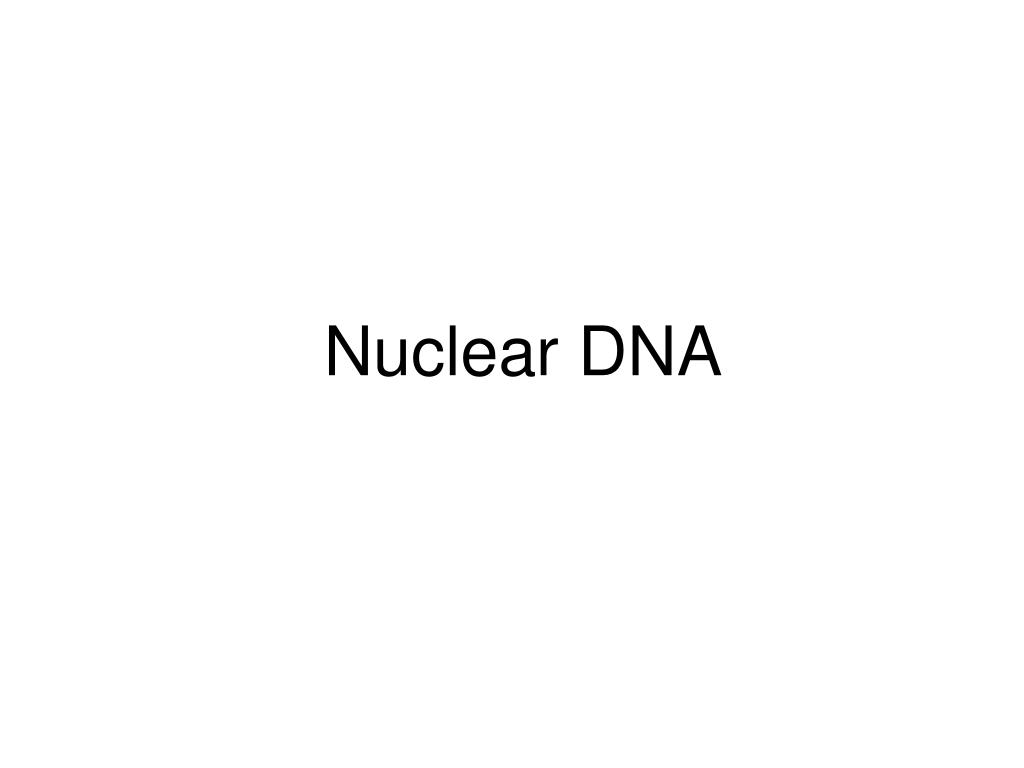 Nuclear DNA