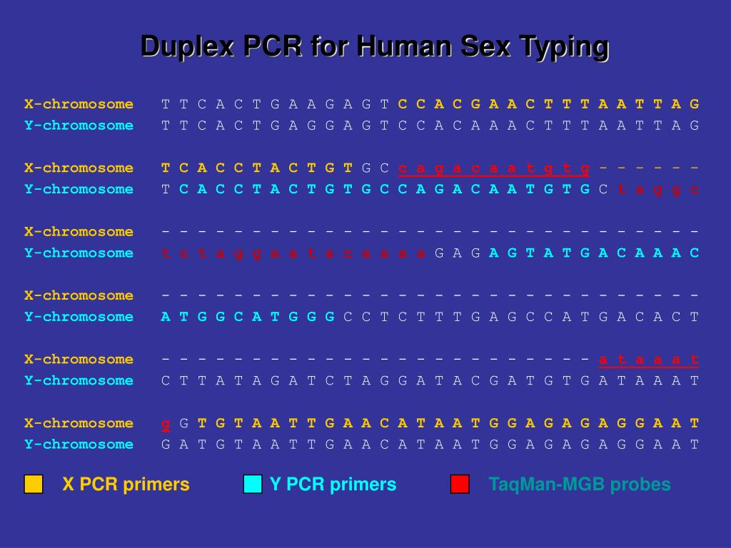 Duplex PCR for Human Sex Typing