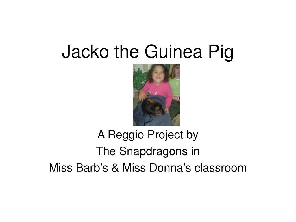 jacko the guinea pig l.