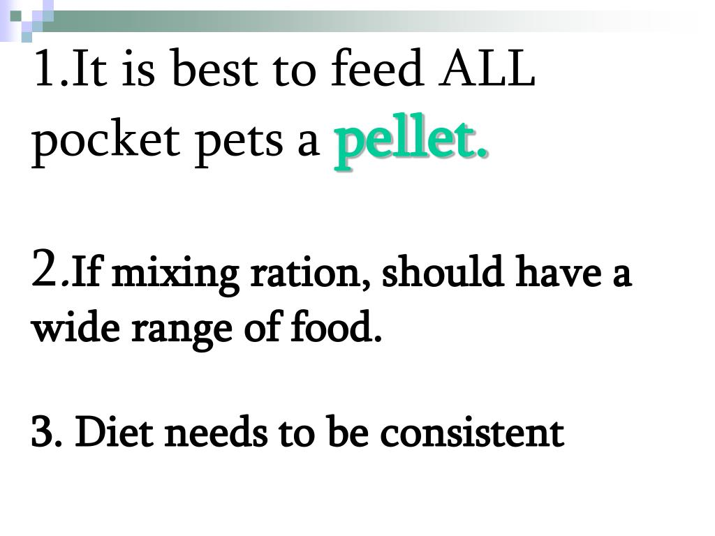 1.It is best to feed ALL pocket pets a
