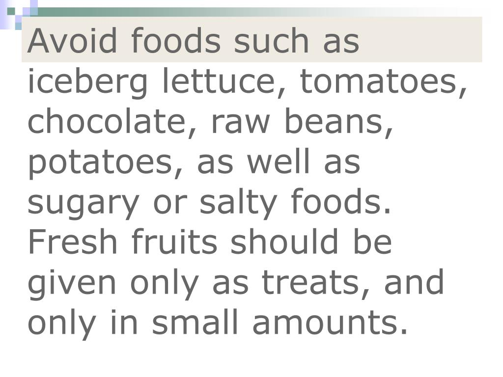 Avoid foods such as iceberg lettuce, tomatoes, chocolate, raw beans, potatoes, as well as sugary or salty foods. Fresh fruits should be given only as treats, and only in small amounts.