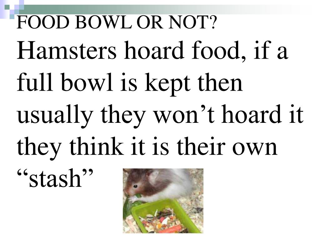 FOOD BOWL OR NOT?