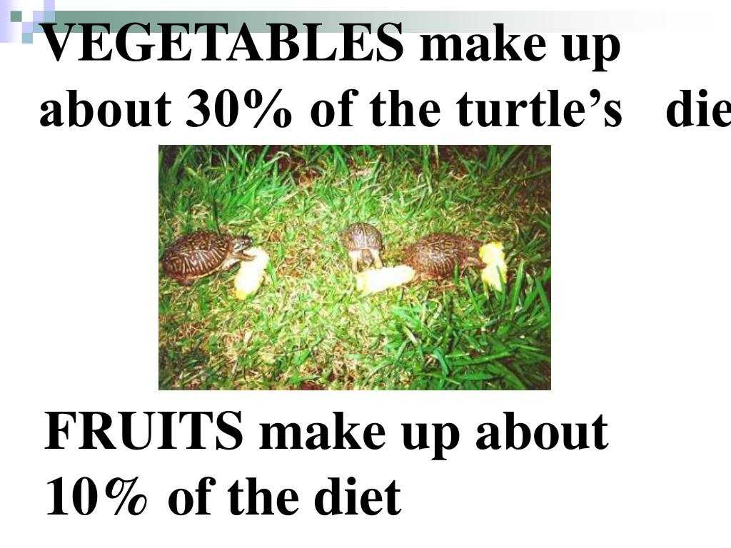 VEGETABLES make up about 30% of the turtle's   diet