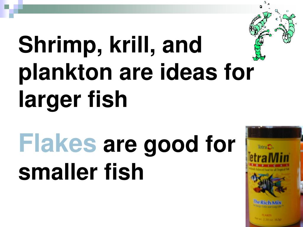 Shrimp, krill, and plankton are ideas for larger fish