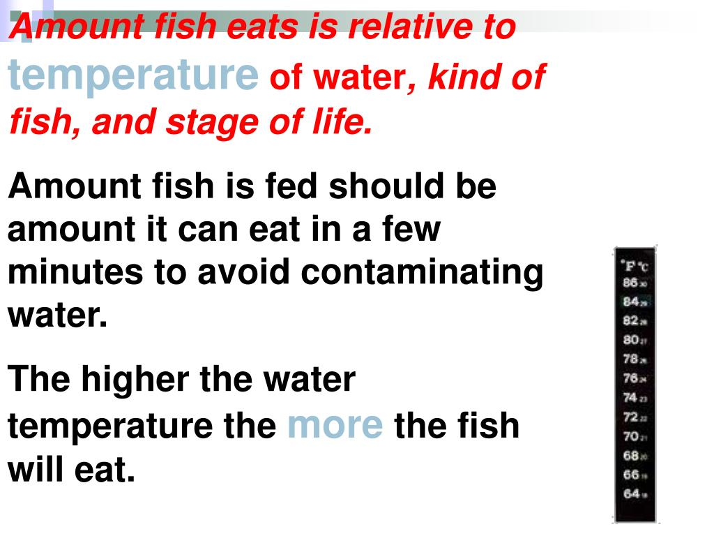 Amount fish eats is relative to