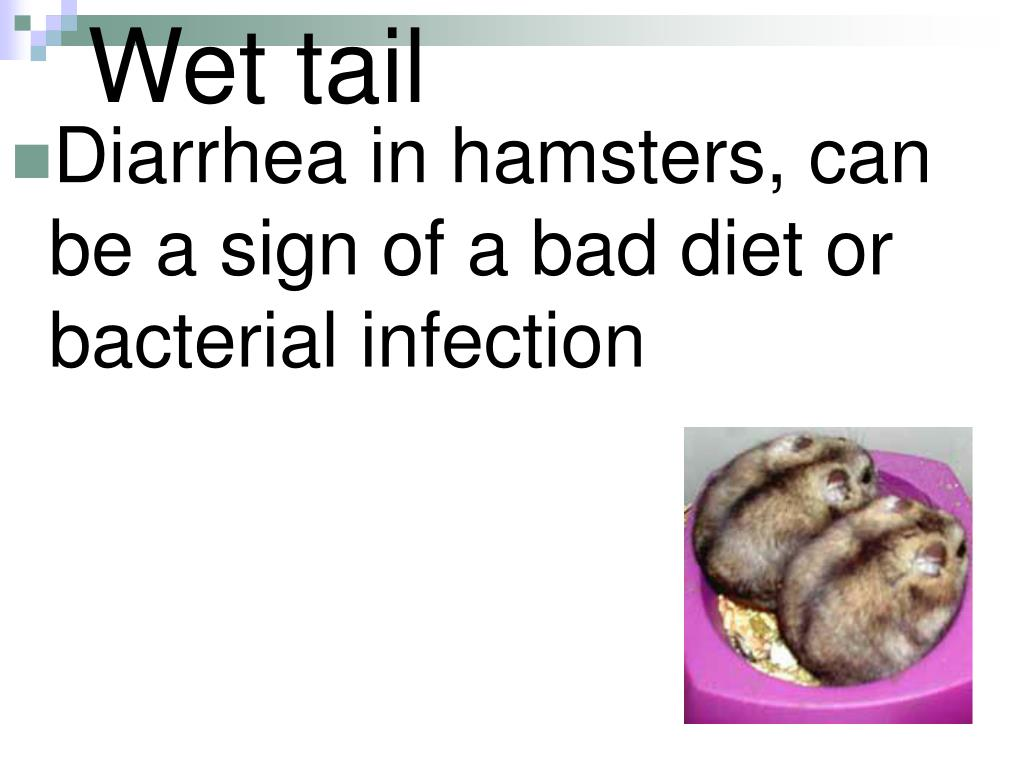 Wet tail