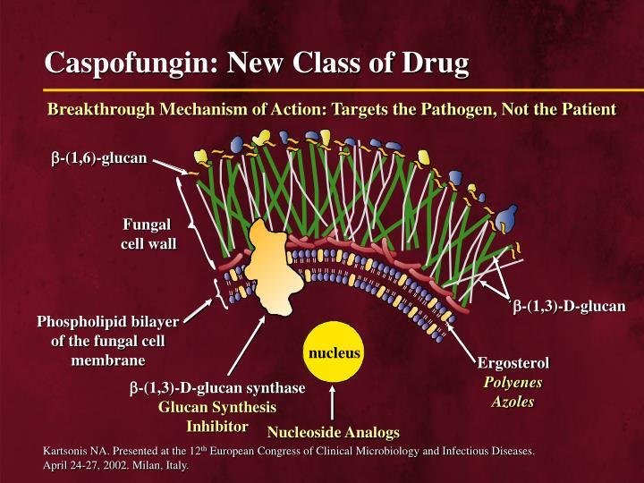 Caspofungin: New Class of Drug