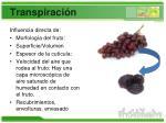 transpiraci n1