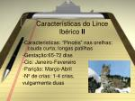 caracter sticas do lince ib rico ii