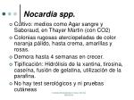 nocardia spp1