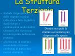 la struttura terziaria2