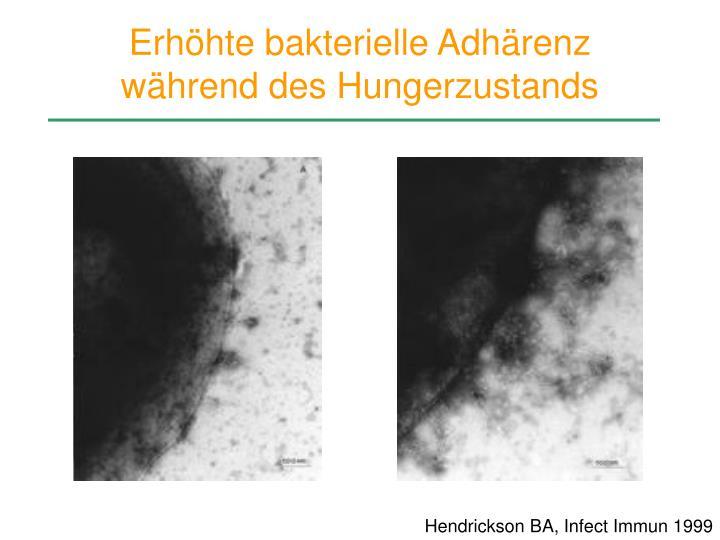 Erhöhte bakterielle Adhärenz während des Hungerzustands