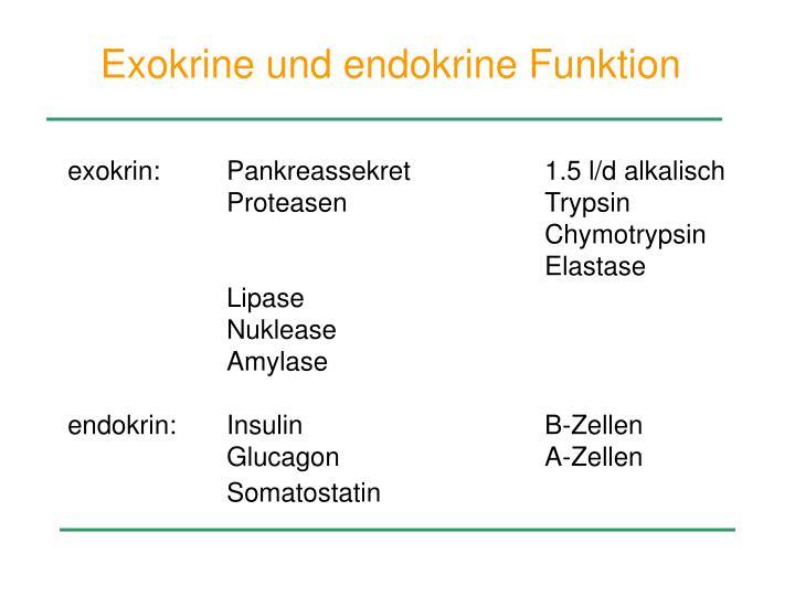 Exokrine und endokrine Funktion