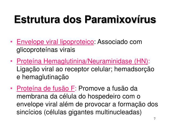 Estrutura dos Paramixovírus