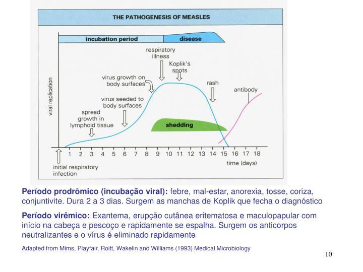 Período prodrômico (incubação viral):
