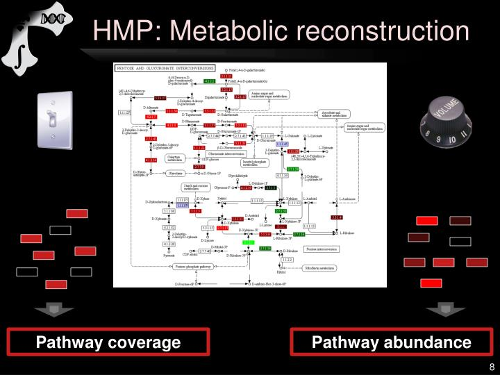 HMP: Metabolic reconstruction