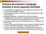 intentos de ense ar el lenguaje humano a otras especies animales