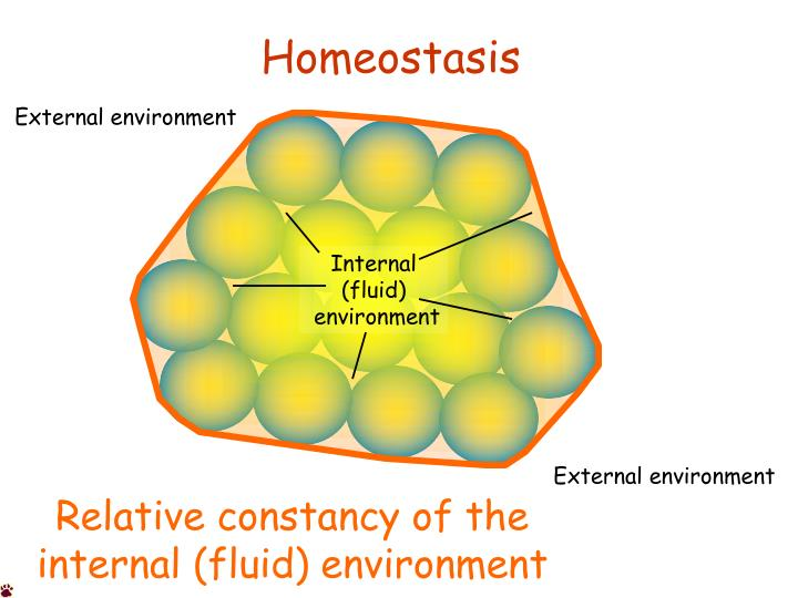 concept of homeostasis Homeostasis or homoeostasis is the property of a system in which a variable (for example, the concentration of a substance in solution, or its temperature) is actively regulated to remain very nearly constant.