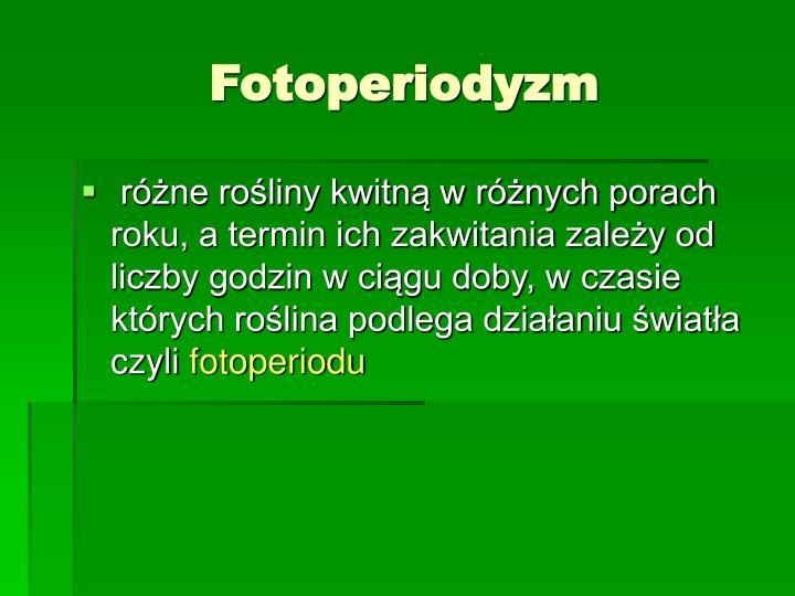 Fotoperiodyzm