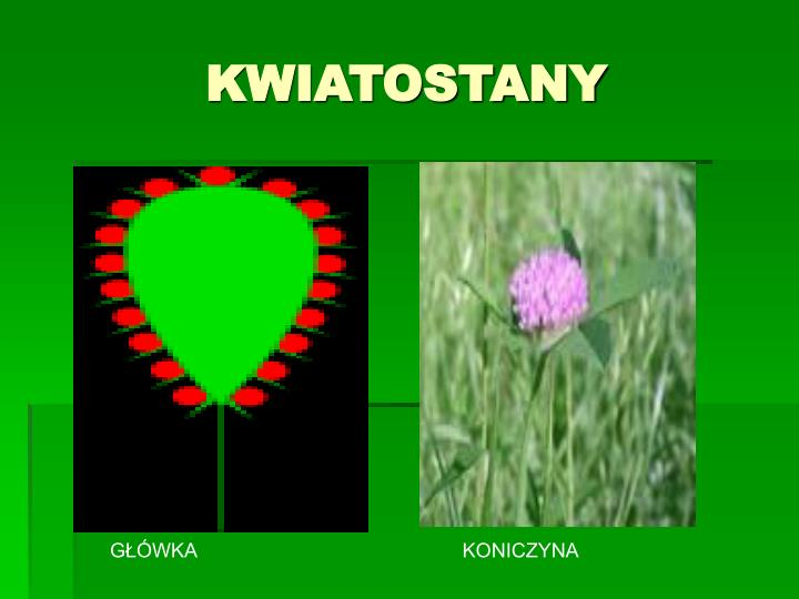 KWIATOSTANY