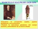 marcello malpighi 1628 1694