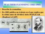 walther flemming 1843 1905