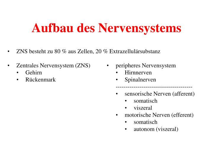 PPT - Nervensystem PowerPoint Presentation - ID:964327