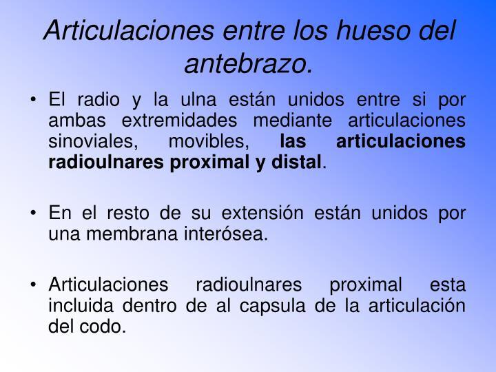 Articulaciones entre los hueso del antebrazo.