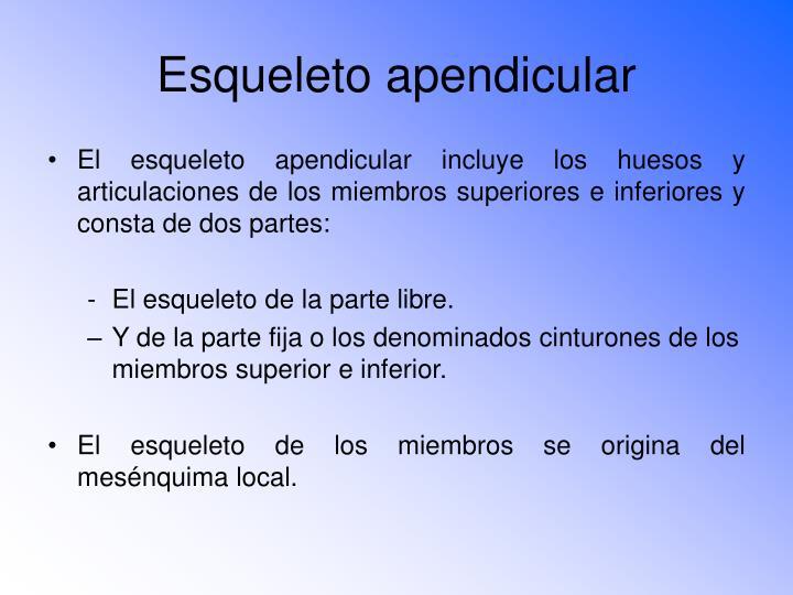 Esqueleto apendicular1