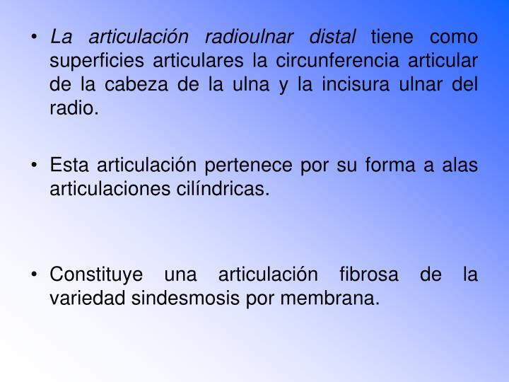 La articulación radioulnar