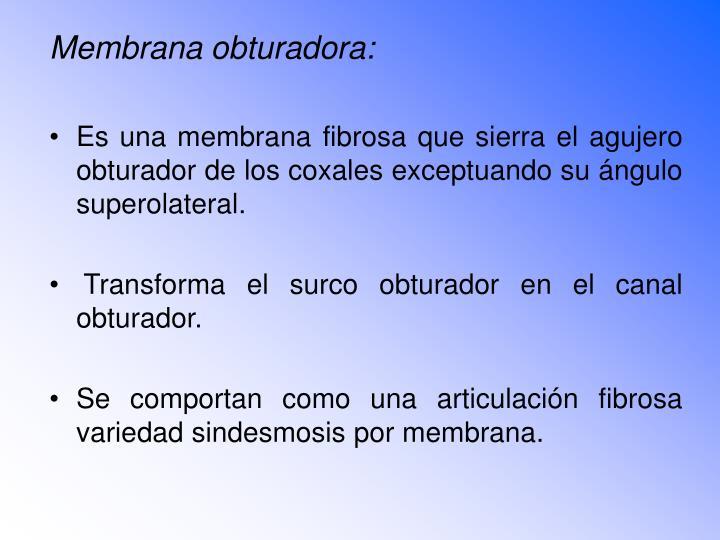 Membrana obturadora: