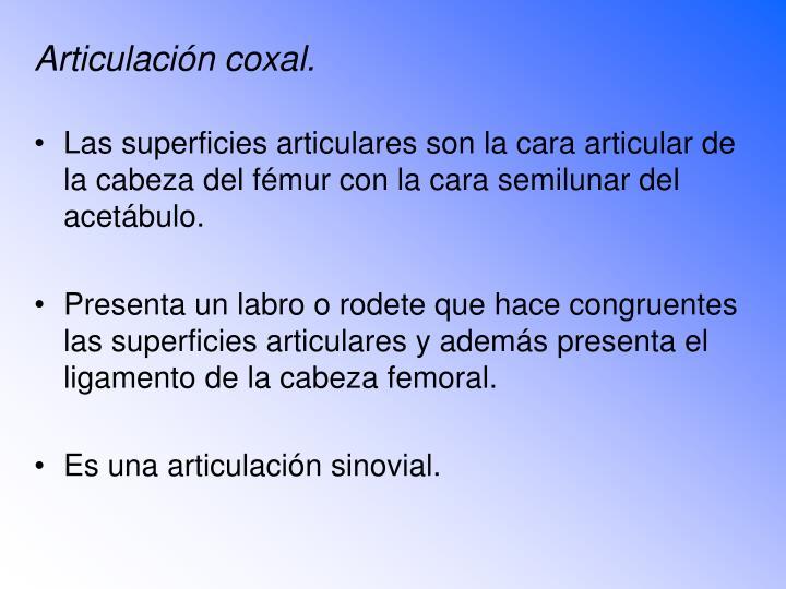 Articulación coxal.