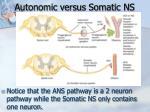 autonomic versus somatic ns1
