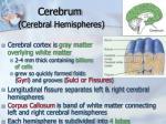 cerebrum cerebral hemispheres