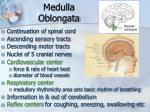 medulla oblongata