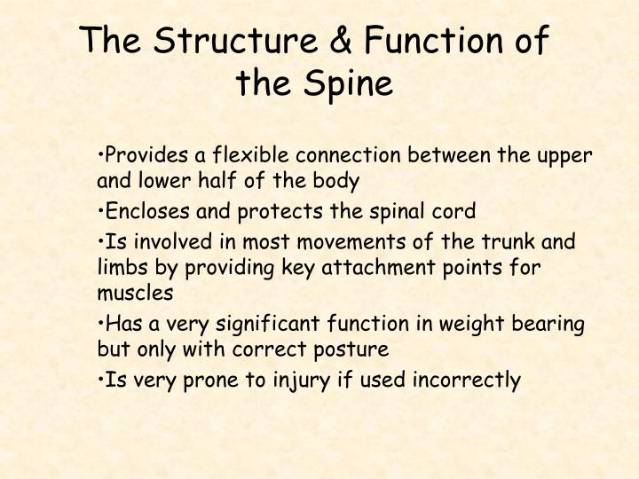 The Structure & Function of the Spine
