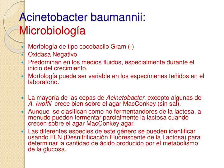 Acinetobacter baumannii: