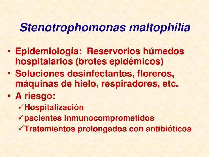Stenotrophomonas maltophilia
