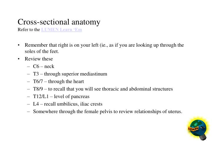 Cross-sectional anatomy