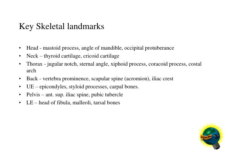 Key skeletal landmarks