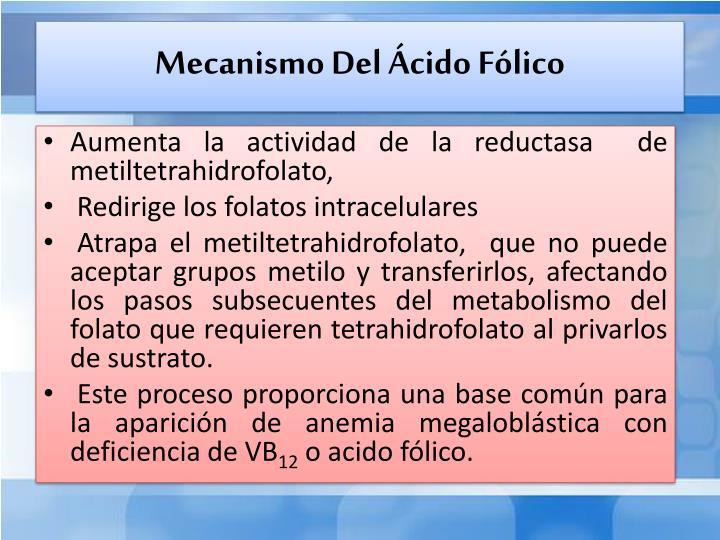 Mecanismo Del Ácido Fólico