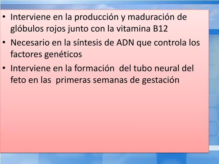 Interviene en la producción y maduración de glóbulos rojos junto con la vitamina B12