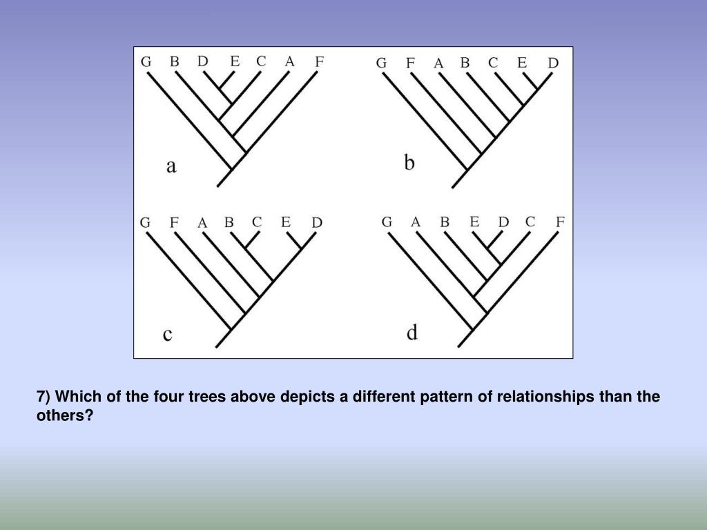 7) Which of the four trees above depicts a different pattern of relationships than the others?