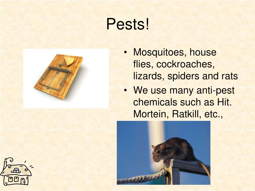Pests!