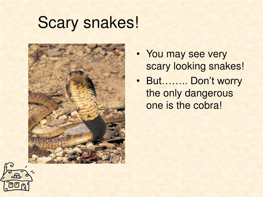 Scary snakes!