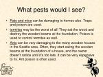 what pests would i see15