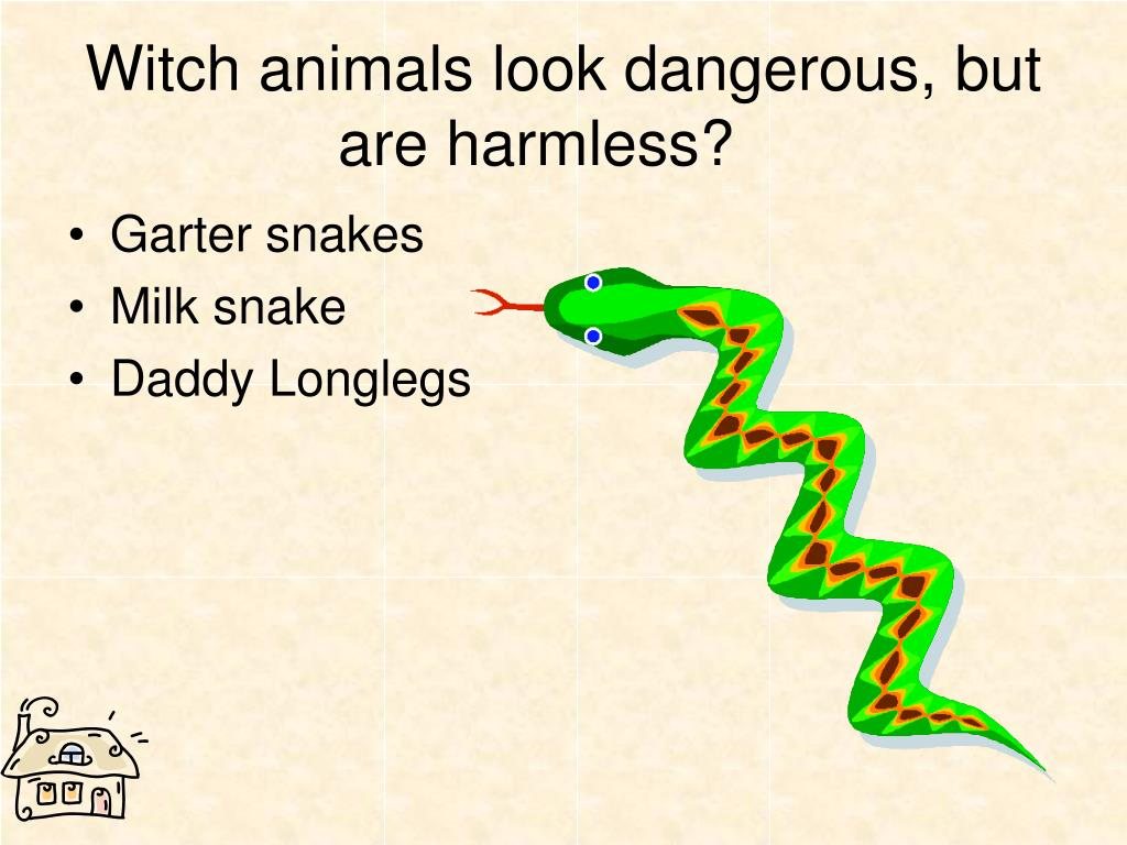 Witch animals look dangerous, but are harmless?